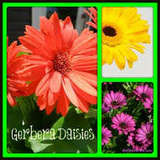 43 best floral beauty images on pinterest