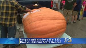 Atlantic Giant Pumpkin Record by Giant Pumpkin Weighs In At More Than 1 500 Pounds Youtube