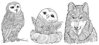 First 9 Illustrations Winter