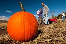 Pumpkin Patch Fort Collins by 10 Best Pumpkin Patches Around Denver In 2016