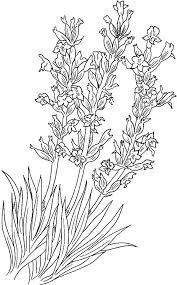 Implantation Lavender Flower Coloring Pages