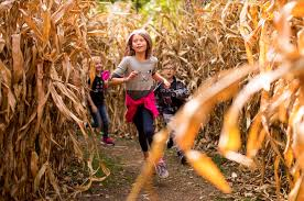 Pumpkin Patch Near Lincoln Il by Lincoln Park Zoo Chicago Il Things To Do In Lincoln Park Chicago