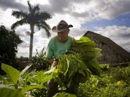 Tours Of Cuban Cigar Farms
