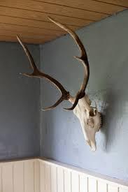 Decorated Cow Skulls Australia by Beautiful Longhorn Skull Wall Decoration Deer Skull Antler Wall