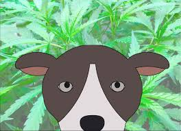 Cannabis For Dogs?   ShowSight Magazine - Home Of Purebred Dogs Best Cbd Oil For Dogs In 2019 Reviews Of The Top Brands And Grateful Dog Treats Canna Pet King Kanine Coupon Code Review Pets Codes Promo Deals On Offerslovecom Hemppetproducts Instagram Photos Videos Cbd Voor Die Diy Book Marketing Buy Cannabis Products Online Mail Order Dispensarygta April 2018 Package Cannapet Advanced Maxcbd 30 Capsules 10ml Liquid V Dog Coupon Finder Beginners Guide To Health Benefits Couponcausecom Purchase Today Your Chance Win A Free Cbdcannabis Hashtag Twitter