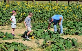 Pumpkin Patch Mobile County Al by Halloween Events From Haunted Houses To Kids U0027 Festivals To U0027rocky