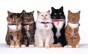 cisapride for cats fiv in cats is feline immunodeficiency contagious meaning
