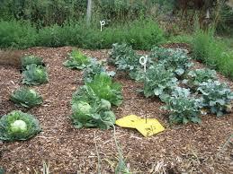 Eden Organic Pumpkin Seeds Where To Buy by Garden Tour Anne U0027s