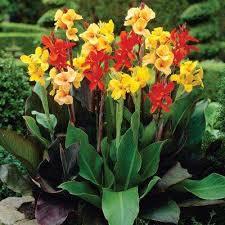 60 flower bulbs garden plants flowers the home depot