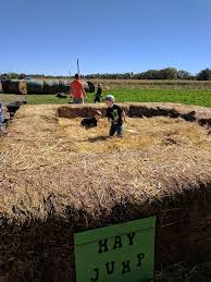 The Great Pumpkin Patch Pueblo Colorado by Harvest Days Pick Your Own Farms 32999 Daniel Rd Pueblo Co