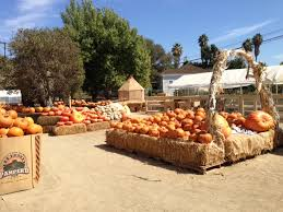 Pumpkin Patch Irvine University by Orange County Mom Blog Orange County Pumpkin Patches