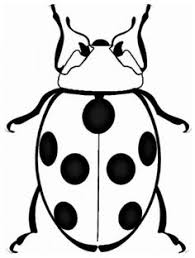 Bug And Insect Coloring Pages Sheets