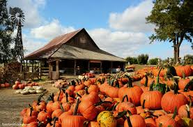 Pumpkin Patch With Petting Zoo by 5 Best Pumpkin Patches In Texas You Have To Visit This Fall