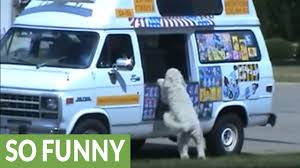 Excited Dog Visits Ice Cream Truck - YouTube Loud Ice Cream Truck Music Could Draw Northbrook Citations Ice Cream Truck Ryan Wong Sheet For Woodwind Musescore Bbc Autos The Weird Tale Behind Jingles Amazoncom Summer Beach Ball Pool Party Room Decor Ralphs Creamsingle Scoop Christmas Day Buy Lego Emmas Multi Color Online At Low Prices Surly Page 10 Mtbrcom Adventure Force Food Taco Walmartcom Bring Home The Magic Of Meijercom Pullback Action Vending By Kinsfun