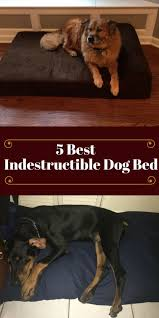 Top Rated Orthopedic Dog Beds by 41 Best Dog Beds For Large Dogs Images On Pinterest Large Dogs