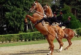 séjours spectacle equestre au cadre noir de saumur philibert voyages