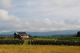 Christmas Tree Farm Packages In Boone Nc by January 2013 Mindfulmagpie