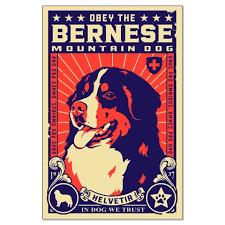 Bernese Mountain Dog Graphics