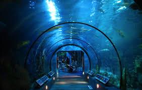 Moody Gardens Aquarium