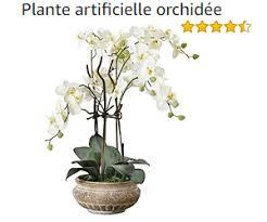 orchidées phalaenopsis entretien soin les conseils orkideo