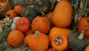 Colorado Pumpkin Patch Farm Camp by Colorado Pumpkin Patch Is Back At A New Location Coupon