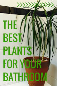 Pot Plants For The Bathroom by The 10 Best Plants For Your Bathroom High Humidity Tropical
