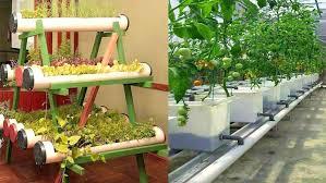 Indoor Vegetable Garden Kit Activesolar Me