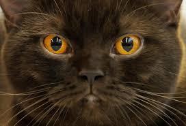 popular cat names popular cat names the trendiest monikers for your pet kitten