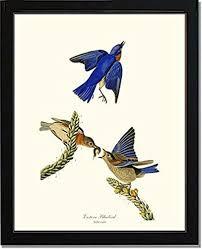 Bird Print Audubon Vintage Art Eastern Bluebird