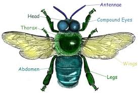 Insects Lessons for Pre K 2 Early Childhood Science