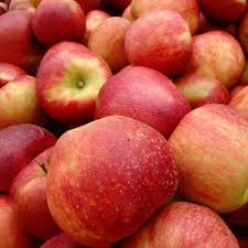Apple Pumpkin Picking Queens Ny by 10 Long Island Apple Picking Spots Long Island Pulse Magazine