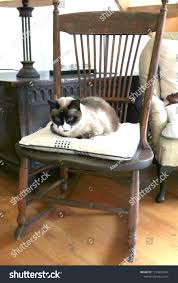 Cat On Antique Rocking Chair Stock Photo (Edit Now) 1153670344