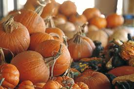 Pumpkin Patches In Okc by Find Tulsa U0027s Best Variety Of Pumpkins And Pumpkin Patch Activities