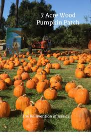 Free Pumpkin Patch In Katy Tx by 7 Acre Wood Pumpkin Patch The Reinvention Of Jessica
