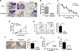 Uterine Lining Shedding After C Section by Cd4 Cd25 Foxp3 Regulatory T Cells Promote Th17 Responses And