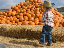 Tapia Brothers Pumpkin Patch by Where To Get Pumpkins In Los Angeles Cbs Los Angeles