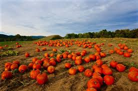 Seattle Pumpkin Patch by Weekend Escape From Nyc Top 10 Pumpkin Patches Near New York