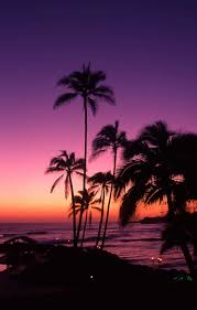 California Beaches Palm Trees Wallpaper Awesome Purple Sunset Tahiti Wallpapers Pinterest