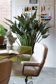 plante de bureau 7 plantes vertes pour votre bureau gamm vert