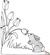 Click The Rabbit Smelling Tulip Coloring Pages To View Printable Version Or Color It Online Compatible With IPad And Android Tablets