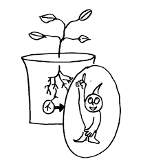 Pumpkin Stages Of Growth Worksheet by How Do Plants Know Which Way Is Up And Which Way Is Down