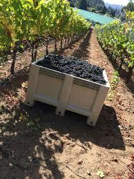 Santa Cruz Summit Christmas Tree Farm by Vineyards Sante Arcangeli Family Wines Corralitos Pinot Noir