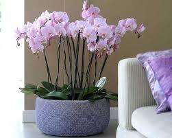 cache pot pour orchidee