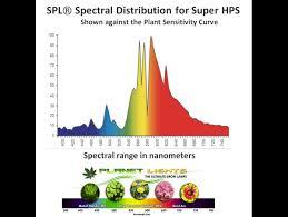 spl皰 horticulture ended 3pack 600 watt high pressure sodium