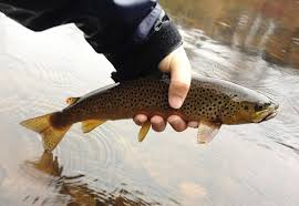 ask the experts floating line or sinking tip for streamers