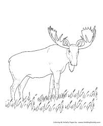 Grazing Moose Coloring Page
