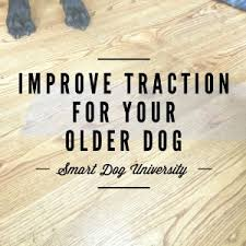 slippery floor tough on your older dog try this smart dog
