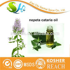 chenopodium oil chenopodium oil suppliers and manufacturers at