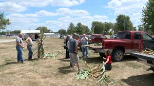 Pumpkin Patch Cambridge Iowa by Weather Issues Nothing New At Nevada Berry Patch Whotv Com