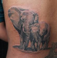 Images Of African Elephant Tattoos